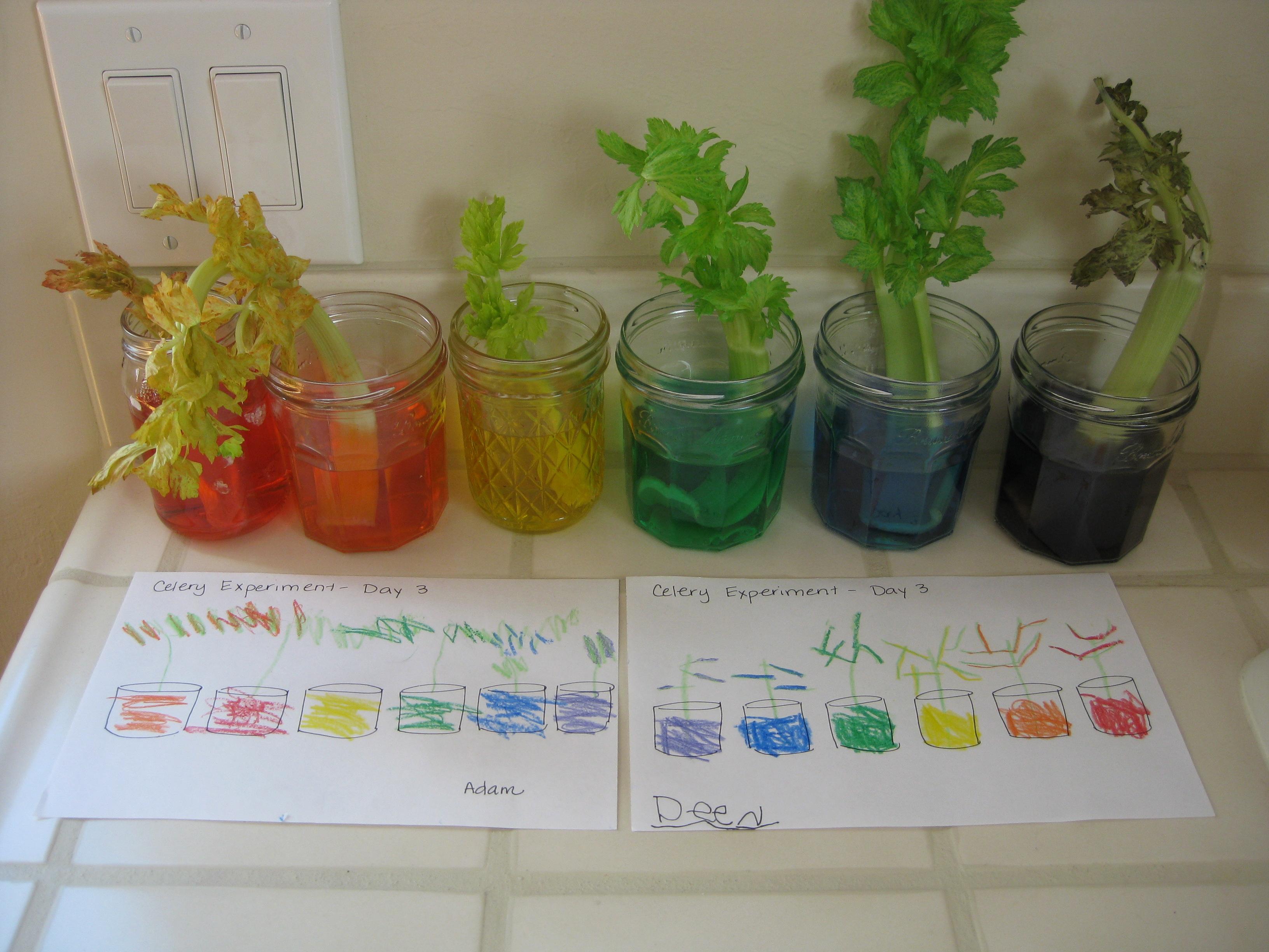 plants | Science 4 Superheroes